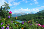 Alaska: Snow Covered Mountains and Flowers